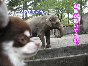IMG_2054.JPG
